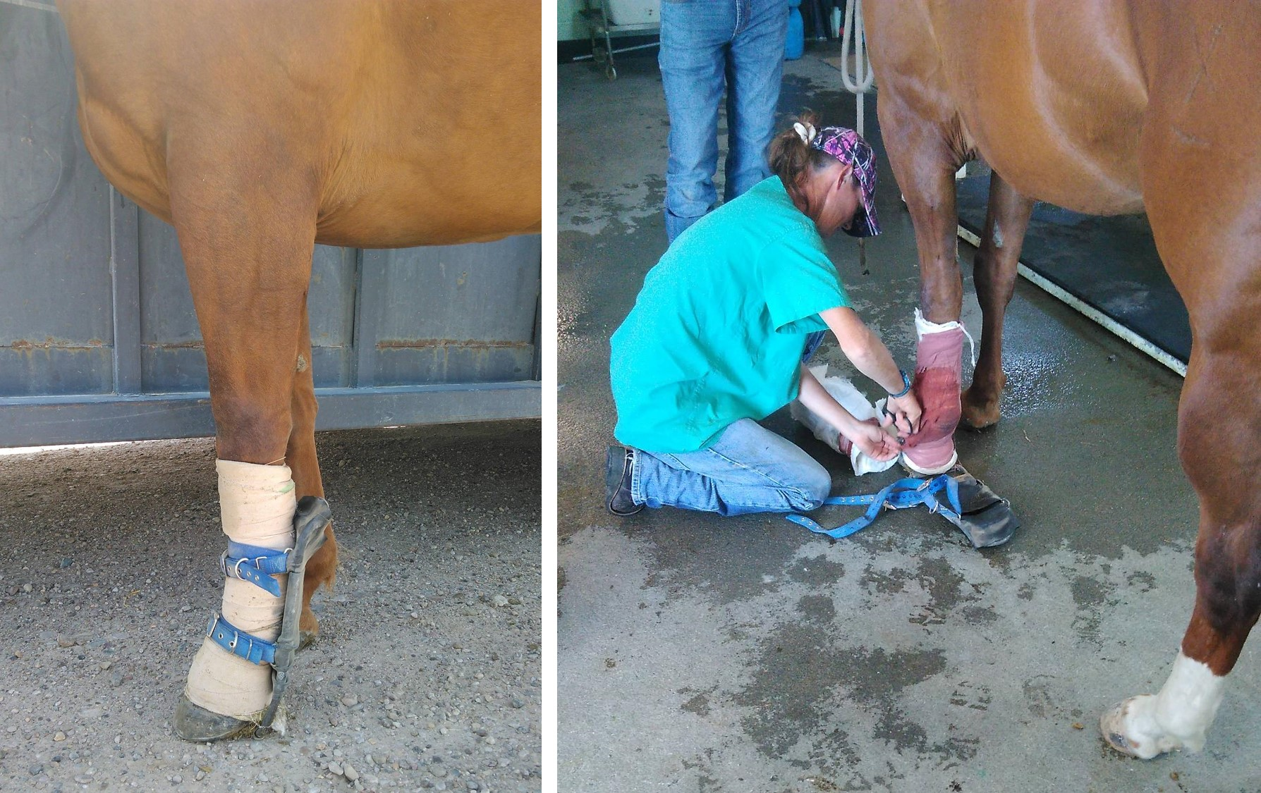 Tendon Injuries | Butler Professional Farrier Schools