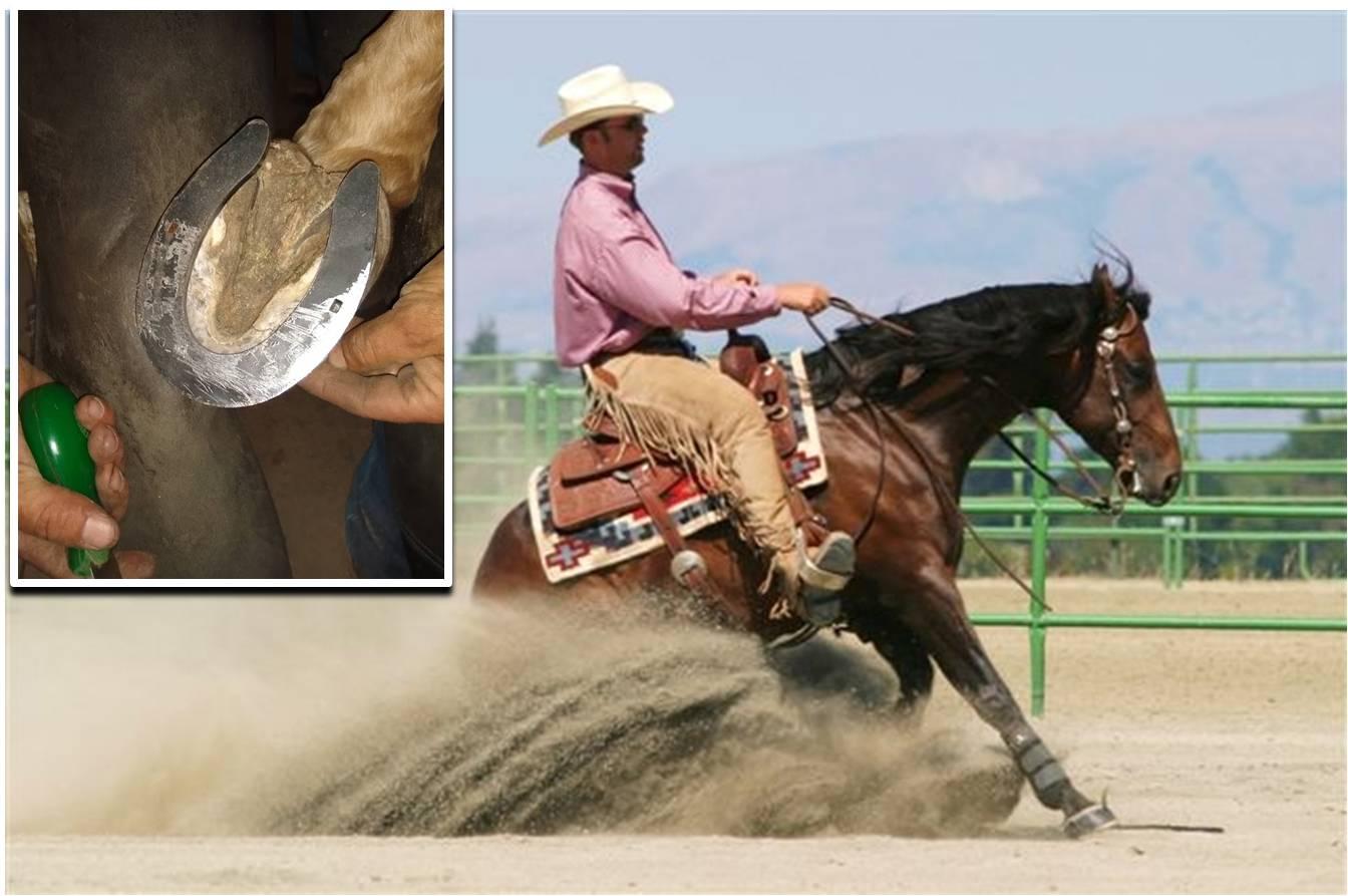 Stalltafel Boxenschild Western Quarter Horse Sliding Stop Reining